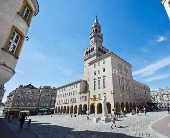 """UM Opole: Akcja """"Żonkile"""" 2019"""